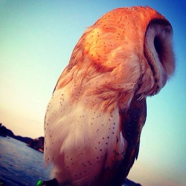 Totem Spirit; Owl