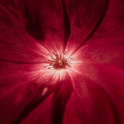 Womb Healing Meditation