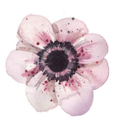 Pink Flower for healing life after abortion daily practice