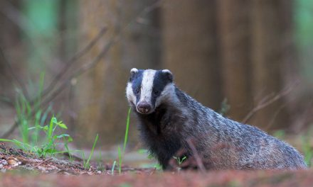 Totem Spirits for Healing: Badger and Earth Worm